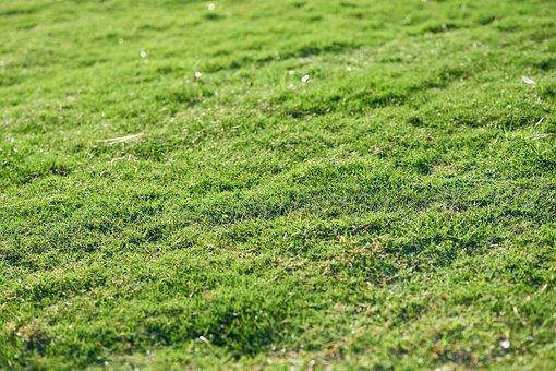 Grass, Green, Chan, Nature, Plant, Landscape, Summer