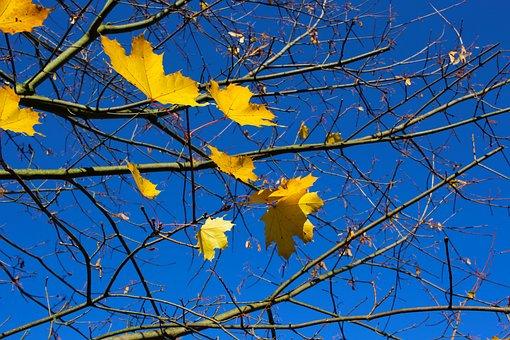 Autumn, Kahl, Leaves, Season, Aesthetic, Tree, Dry
