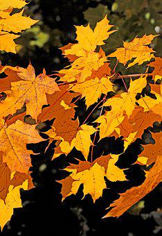Foliage, Autumn, Seasons Of The Year, Fall Colors