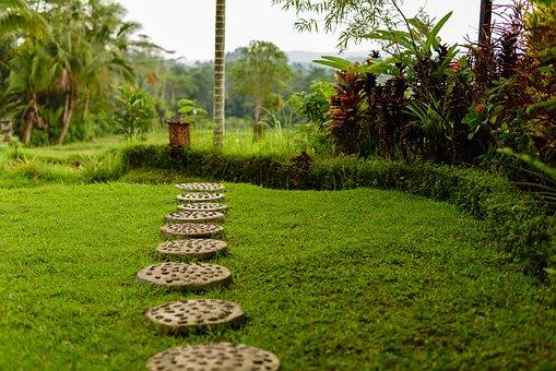 Green Field, Bali, Green, Organic, Land, Summer