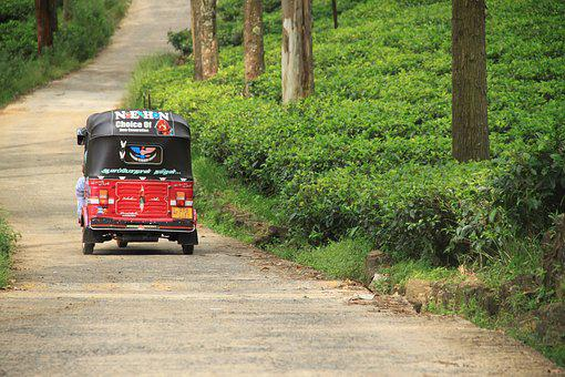 Tuk Tuk, Asia, Sri Lanka, Tea, Tea Factiry, Tea Plant
