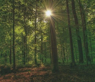 Forest, Autumn, Nature, Landscape, Trees, Mood, Leaves