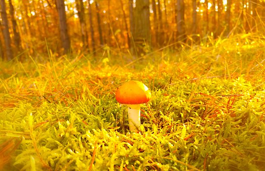 Mushroom, Moss, Forest, Autumn, Seasons Of The Year