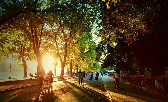 Ukraine, Outdoors, Travel, City, Europe, Tree, Autumn