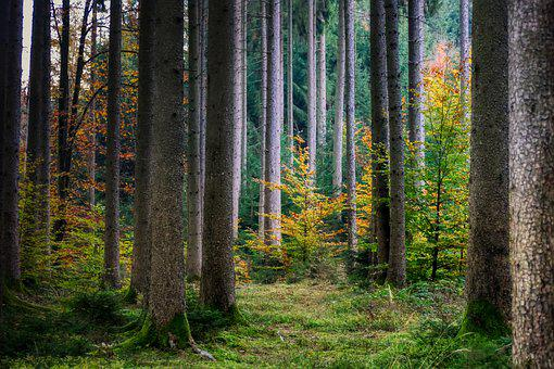 Forest, Autumn, Nature, Landscape, Tree, Mood, Mystical