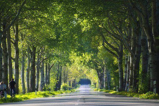 Tree Lined Avenue, Trees, Avenue, Nature, Road, Forest