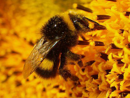 Animal, Beautiful, Bee, Black, Bright, Bug, Bumble Bee