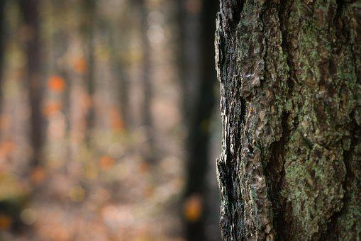 Tree, Trunk, Bokeh, Nature, Forest, Wood, Soft