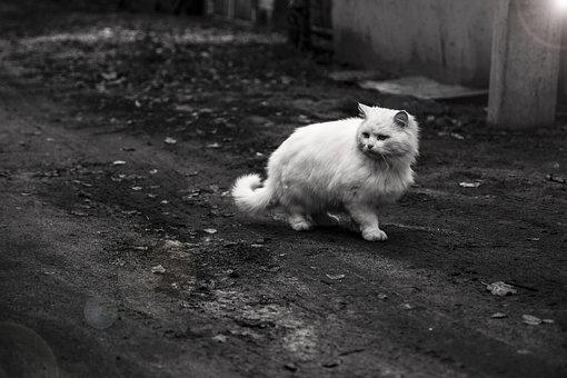 Cat, Animal, Pet, Tiger, Dangerous, Portrait, Zoo