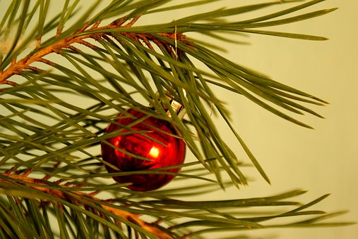 New Year's Eve, Christmas Tree, Holiday, Christmas