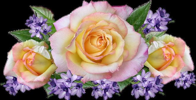Flowers, Roses, Bulbs, Arrangement, Garden, Nature