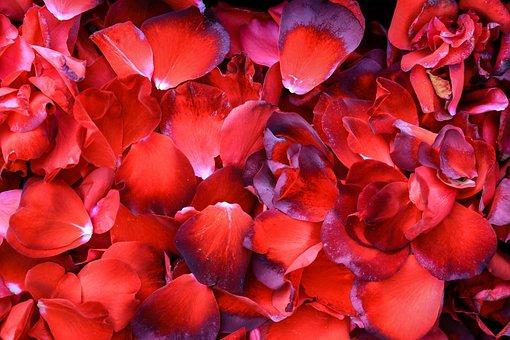 Rose, Rose Petals, Romantic, Flowers, Wallpaper