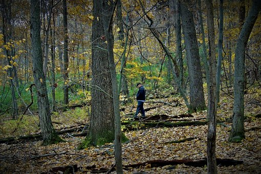 Forest, Man, Alone, Trees, Woods, Depression, Lonely