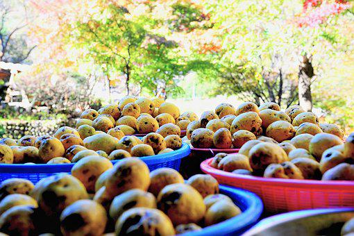 Fruit, Autumn, Chinese Quince, Motor And Car, Health
