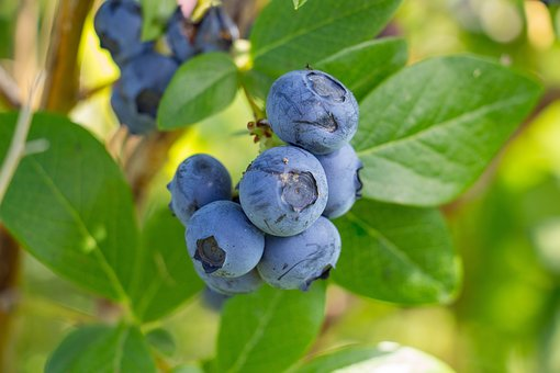 Blueberry, Fruit, Healthy, Berries, Blueberries, Food