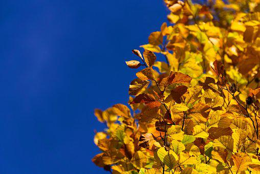 Colorful, Leaves, Color, Golden, Gold, Autumn, Nature
