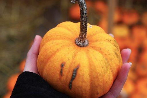 Pumpkin, Photography, Orange, Halloween, October