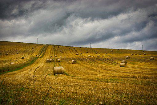 Field, Harvested, Straw, Harvest, Agriculture