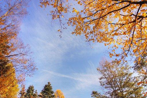 Indian Summer, Light, Autumn, Nature, Leaves