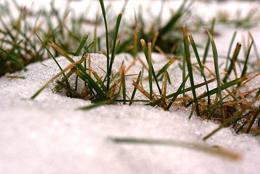 The First Snow, Freezing, Autumn, Nature, Landscape