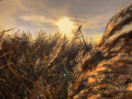 Sunset, Wheatfield, Field, Landscape, Sunlight, Evening