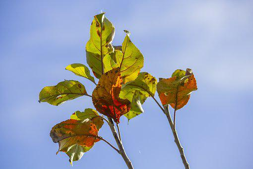 Leaf, Leaves, Branch, Sky, Dry, Autumn