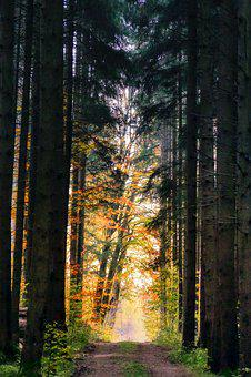 Forest, Autumn, Nature, Landscape, Tree, Away, Mood