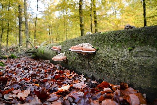 Elves Bench, Mushroom, Dead Tree, Nature, Tree, Autumn