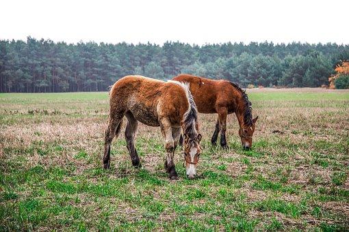 The Horse, Horses, Nature, Animals, Horse, Pony