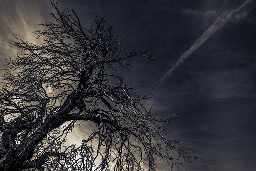 Tree, Night, Branches, Evening, Nature, Landscape, Dark