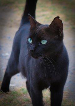 Cat, Animal, Pet, Domestic Cat, Cat's Eyes, Eyes, Black