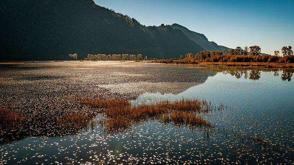 Marsh, Pitt Lake, Pitt Meadows, Canada, Lake