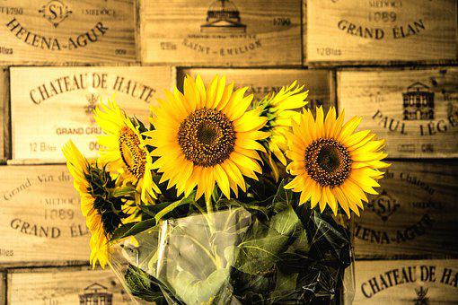 Flowers, Sunflowers, Yellow, Summer, Plant, Colorful