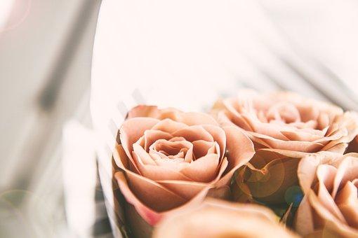 Rose, Pink, Flower, Bloom, Nature, Love, Romantic