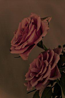 Rose, Old, Vintage, Flower, Texture, Antique, Red