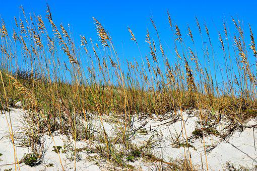 Sea Oats, Ocean, Sand Dunes, Beach, Nature, Sky, Coast