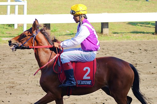 Horse, Race, Indonesia, Animal, Nature, Overview, Speed