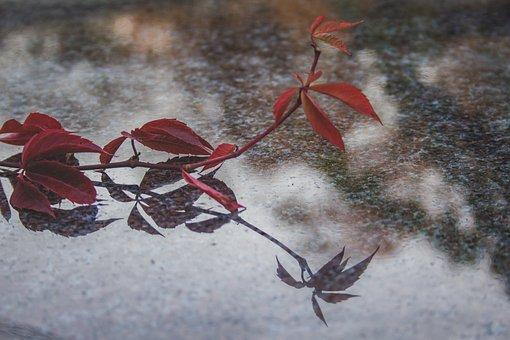 Reflection, Granite, Nature, Stone