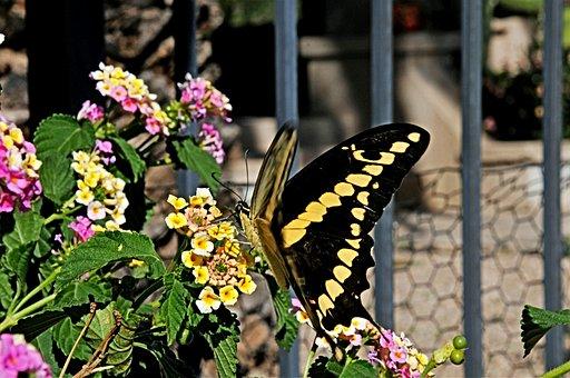 Butterfly, Butterflies, Flower, Summer, Nature, Insect