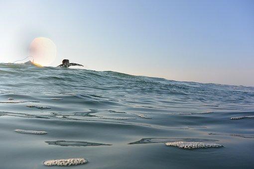 Surf, Sea, Wave, Surfboard, Surfer, Paddle