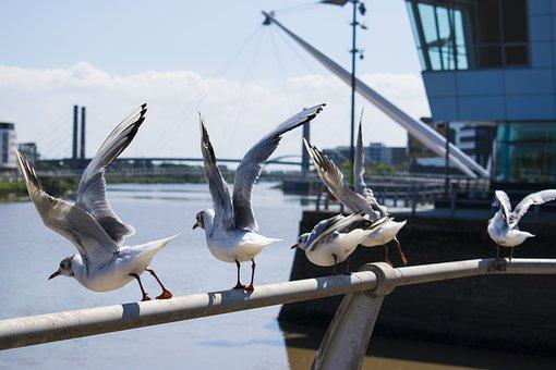 Seagulls, Bird, Fly, White Bird, Marine, Sky, Wing