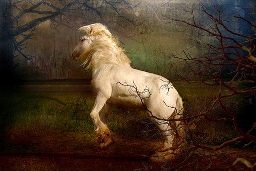 Horse, Gray, Shire, Mane, Wild, Freedom, Sleepy Hollow