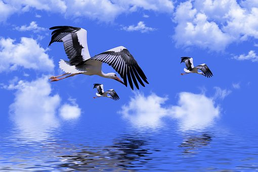 Birds, Stork, Animals, Plumage, Storks, Wings, Feathers