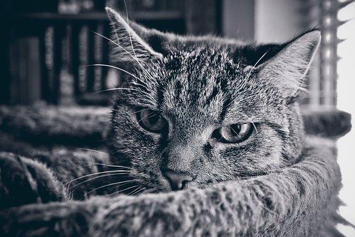 Animal, Cat, Pet, Animal World, Domestic Cat, View