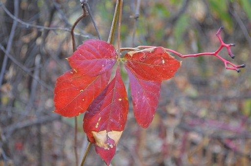 Leaf, Autumn, Coloring, Season