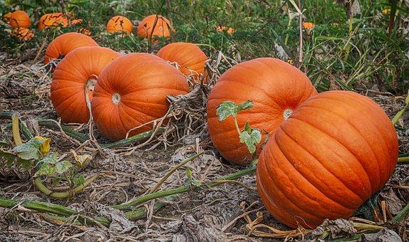 Pumpkin, Autumn, Vegetables, Halloween, Food, Harvest