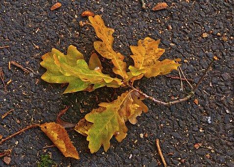 Oak Leaf, Leaf, Asphalt, Road, Autumn, Morning