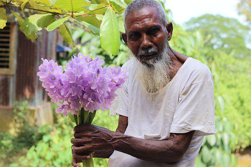 Man, Old, Flowers, Nature, Plant, Beard, Clematis