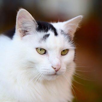 Cat, Portrait, Pet, Animal World, Domestic Cat, Mammal