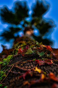 Autumn, Fall, Leaves, Colorful, Nature, Bright, Tree
